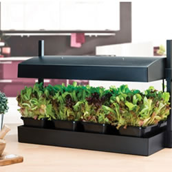 Image for Grow Lights