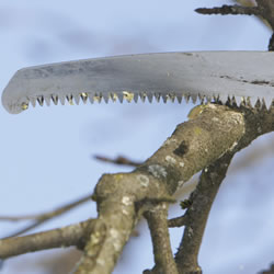 Image for Pruning Saw