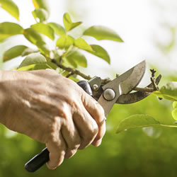 Image for Cutting, Pruning & Chopping