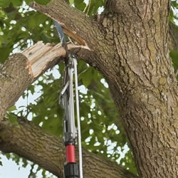 Image for Telescopic Tree Pruning