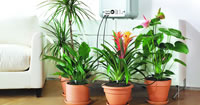 Indoor Watering Kits