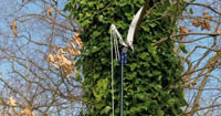 Telescopic Tree Pruning