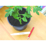 Small Image of Bosmere Plant Labels with Pencil - Pack of 25