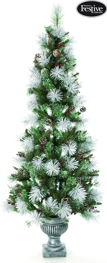 Image of Frosted Bristle Pine Potted 6ft Christmas Tree