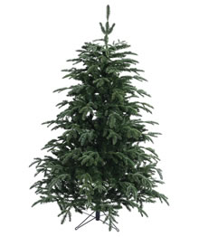 Image of Nordman Fir 10ft Christmas tree