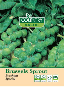 Image of Country Value Evesham Special Brussels Sprout Seeds