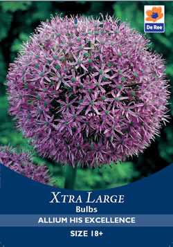 Image of Allium His Excellence Xtra Large Bulbs