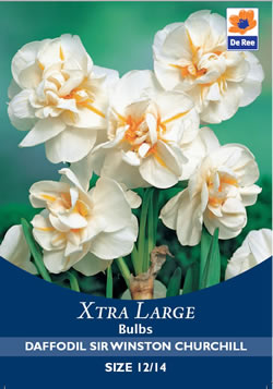 Image of Daffodil Sir Winston Churchill Xtra Large Bulbs