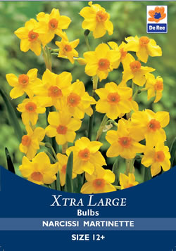 Image of Narcissi Martinette Xtra Large Bulbs