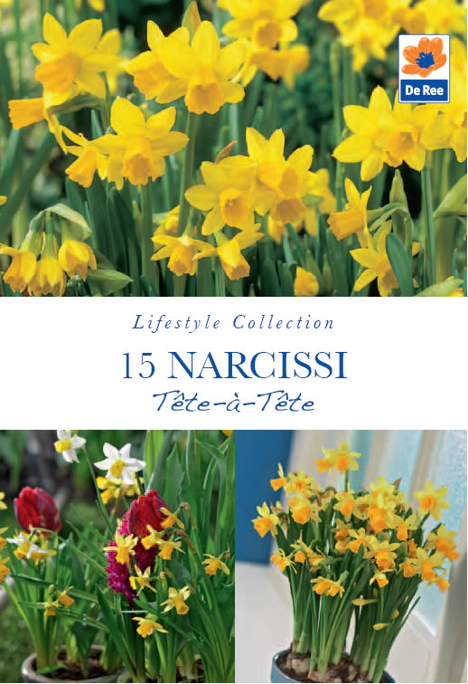 narcissi tete a tete lifestyle bulbs 0 6 garden4less uk shop. Black Bedroom Furniture Sets. Home Design Ideas