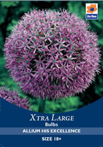 Small Image of Allium His Excellence Xtra Large Bulbs