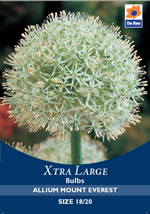 Small Image of Allium Mount Everest Xtra Large Bulbs