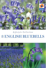 English Bluebell Lifestyle Collection Bulbs
