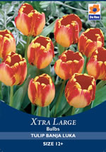 Small Image of Tulip Banja Luka Xtra Large Bulbs
