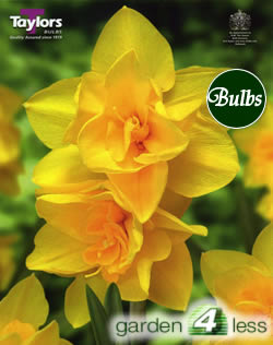 Image of Daffodil Double Smiles Bulbs - Species Narcissi