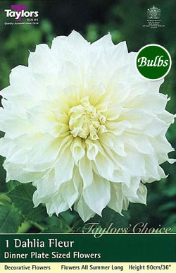 fleur special dahlia tuber garden4less uk shop. Black Bedroom Furniture Sets. Home Design Ideas