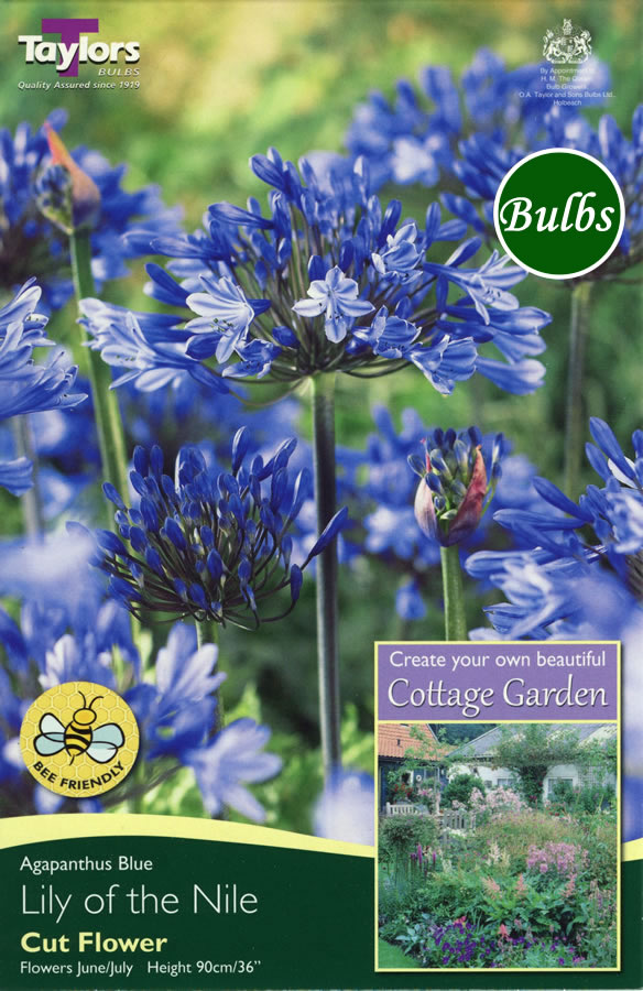 Agapanthus blue cottage bulbs garden4less uk shop for Gardening 4 less reviews