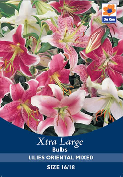 Image of Lilies Oriental Mixed Xtra Large Bulbs