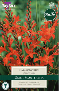 Image of Masonorum- Crocosmia Bulb