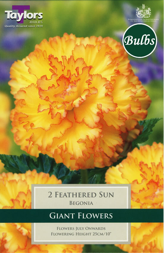 Image of Feathered Sun - Exotic Begonia Bulb