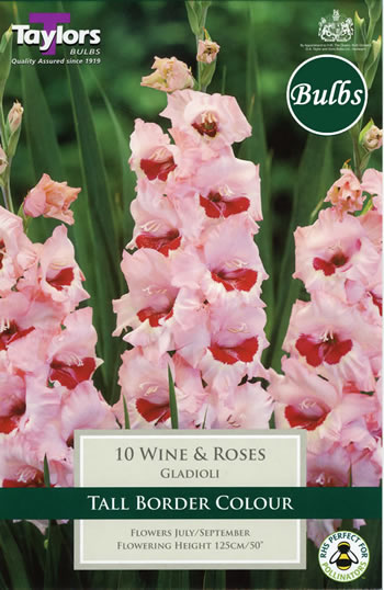 Image of Wine and Roses -Large Flowering Gladioli Bulb