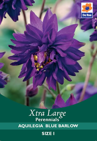 Image of Aquilegia Blue Barlow Xtra Large Bulbs