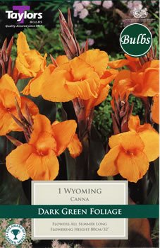 Image of Wyoming- Canna Bulb