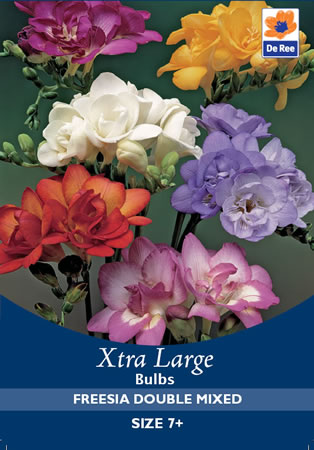 Image of Freesia Double Mixed Xtra Large  Bulbs