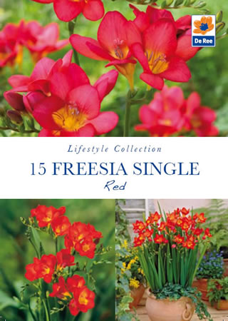 Image of Freesia Single Red Lifestyle Collection Bulbs