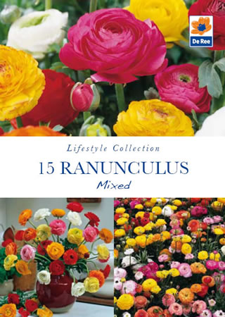 Image of Ranunculus Mixed Lifestyle Collection Bulbs