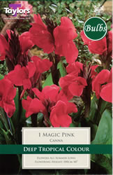 Small Image of Magic Pink  - Canna Bulb