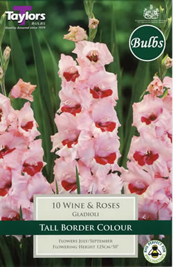 Small Image of Wine and Roses -Large Flowering Gladioli Bulb