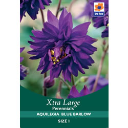 Small Image of Aquilegia Blue Barlow Xtra Large Bulbs