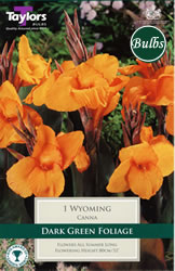 Small Image of Wyoming- Canna Bulb