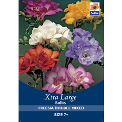 Small Image of Freesia Double Mixed Xtra Large  Bulbs
