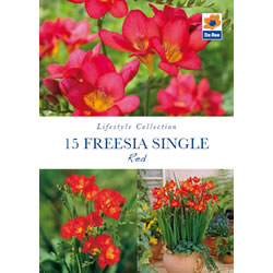 Small Image of Freesia Single Red Lifestyle Collection Bulbs