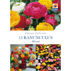 Small Image of Ranunculus Mixed Lifestyle Collection Bulbs