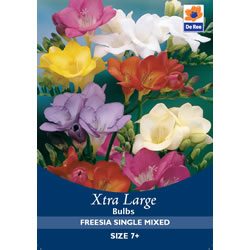 Small Image of Freesia Single Mixed Xtra Large Bulbs