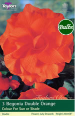 Orange Double Begonia Bulb