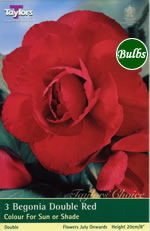 Red Double Begonia Bulb
