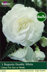White Double Begonia Bulb