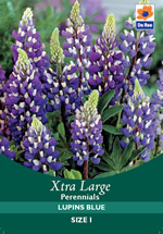 Lupins Blue Xtra Large Bulbs