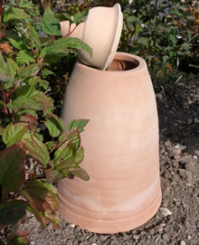 Image of 65cm Terracotta Rhubarb Forcer / Clay Cloche