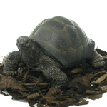 Image of Pet Pals Baby Tortoise - Resin Garden Ornament