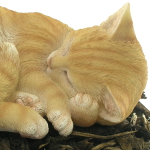 Extra image of Sleeping Ginger Cat - Resin Garden Ornament