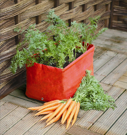 Image of Haxnicks Carrot Patio Planter - Pack of 2
