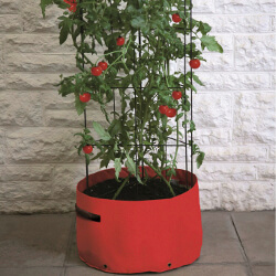 Small Image of Haxnicks Tomato (Climbing) Patio Planter