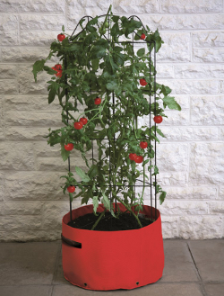 Image of Haxnicks Tomato (Climbing) Patio Planter