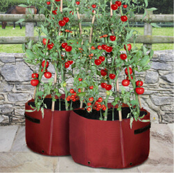 Small Image of Haxnicks Tomato Patio Planter - Pack of 2
