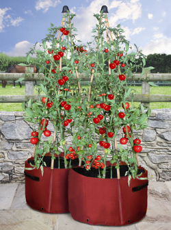 Image of Haxnicks Tomato Patio Planter - Pack of 2